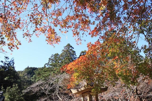 八柱神社の紅葉(その1)(撮影:11月30日)_e0321325_14574830.jpg
