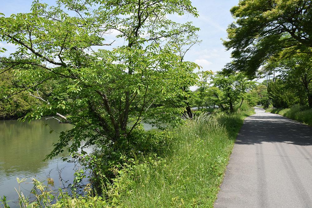 丹波国篠山城跡を歩く。 その5 ~三の丸、外堀、馬出~_e0158128_15481021.jpg