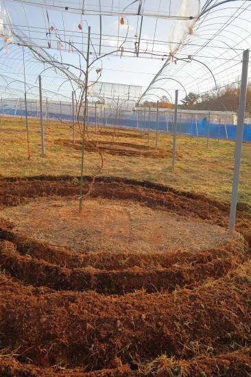 第2圃場の土作り_d0336530_19100974.jpg
