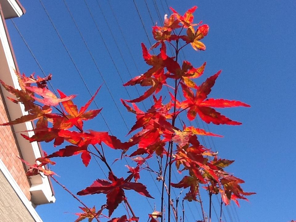 庭の紅葉_c0365341_19114273.jpeg