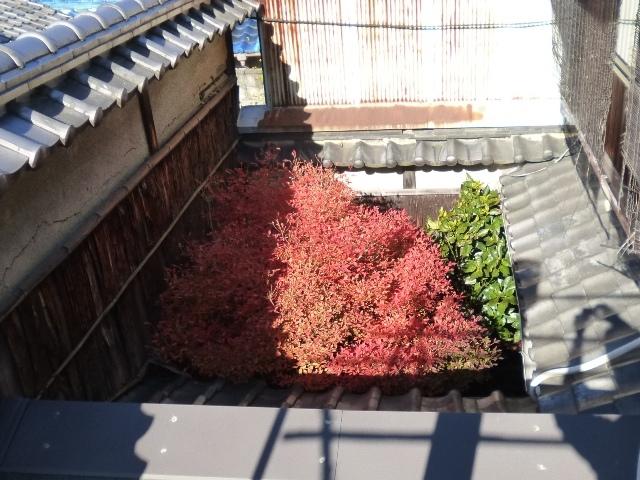 坪庭上空3メートルくらい 満天星の紅い傘_e0230141_21274437.jpg