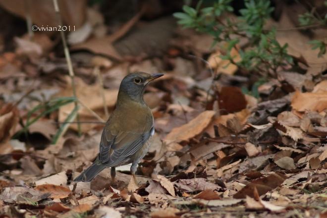野鳥を観察する会 in 真岡井頭公園_e0227942_21554397.jpg