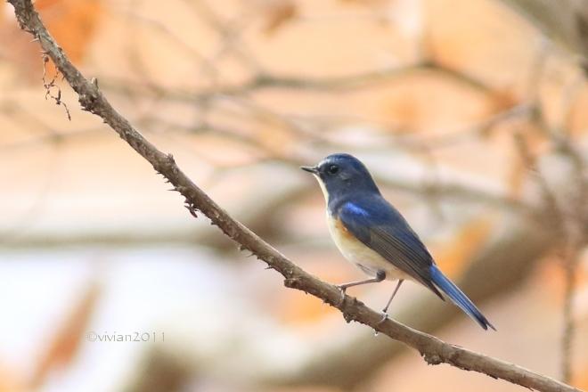 野鳥を観察する会 in 真岡井頭公園_e0227942_21574955.jpg