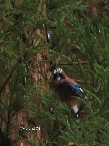 野鳥を観察する会 in 真岡井頭公園_e0227942_22010298.jpg