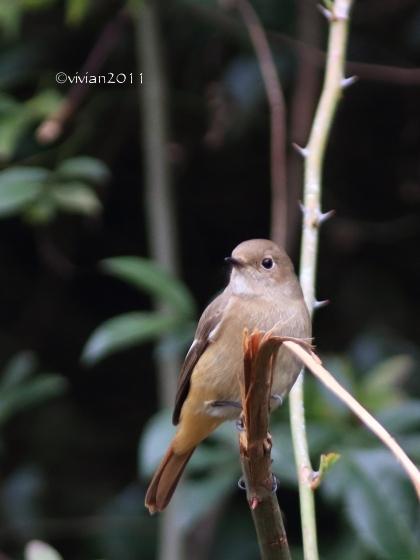 野鳥を観察する会 in 真岡井頭公園_e0227942_22091448.jpg
