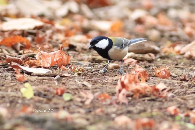 野鳥を観察する会 in 真岡井頭公園_e0227942_22112280.jpg