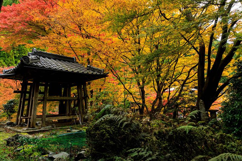 紅葉が彩る京都2019 杉坂の紅葉_f0155048_2356784.jpg
