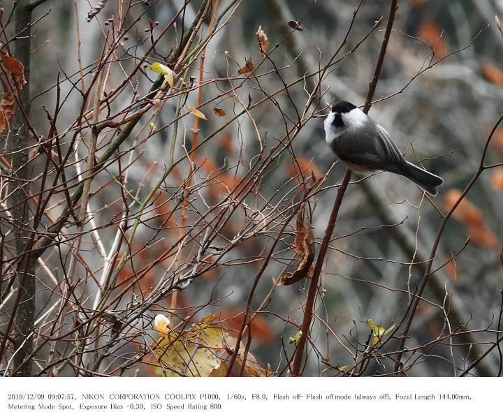 埼玉県県民の森 2019.12.9(1)_c0062451_08004435.jpg