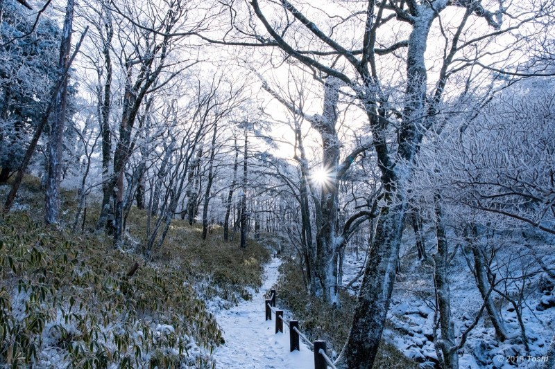 大台ヶ原が凍る日 2_c0350572_23114943.jpg