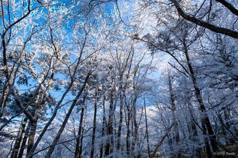 大台ヶ原が凍る日 2_c0350572_23115325.jpg
