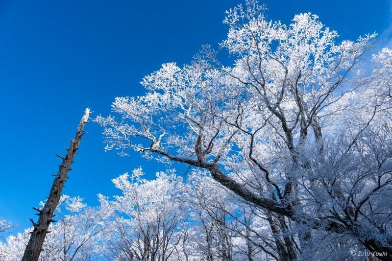 大台ヶ原が凍る日 2_c0350572_23120304.jpg