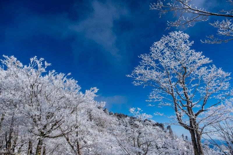 大台ヶ原が凍る日 2_c0350572_23122246.jpg