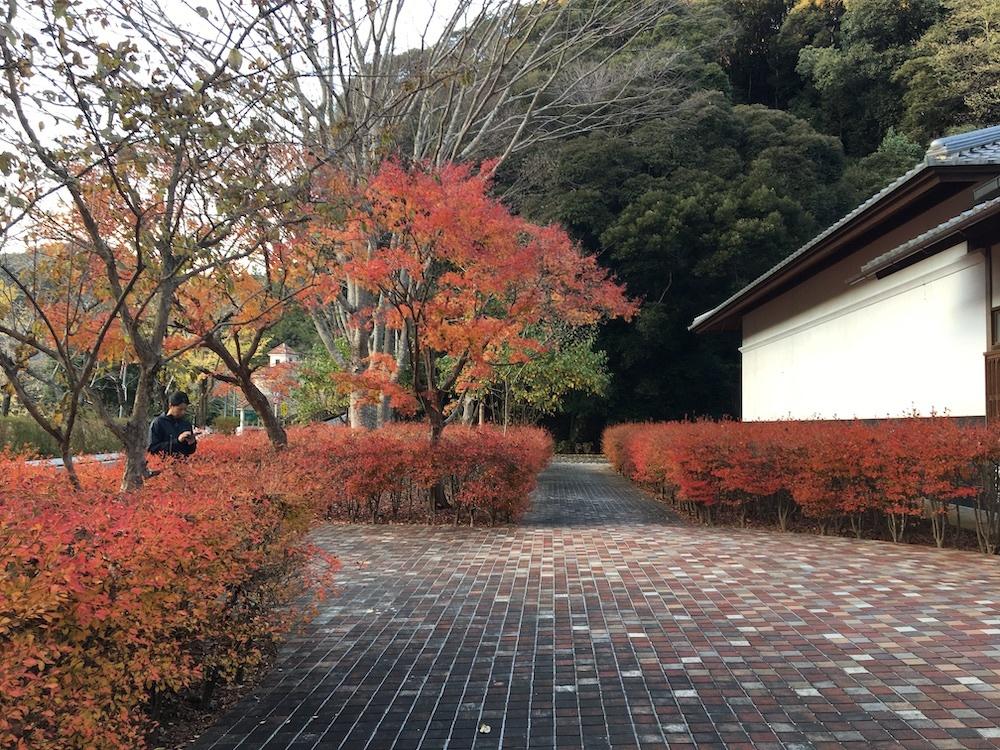 季節の食卓 2019紅葉〜_b0207676_12141102.jpg