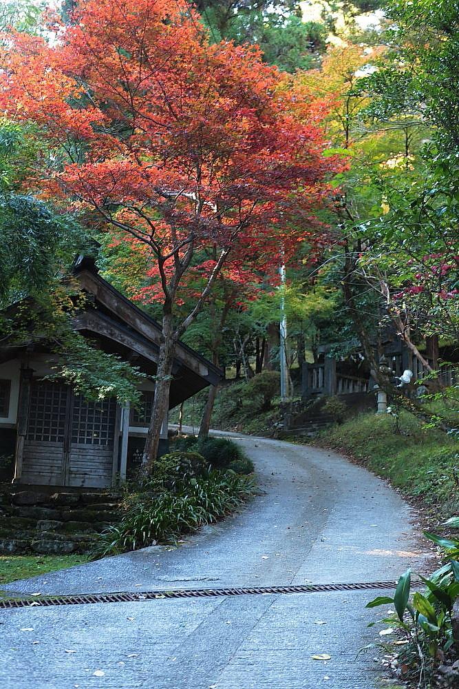 飯能市 モミジの東郷公園 その1_e0165983_12483737.jpg