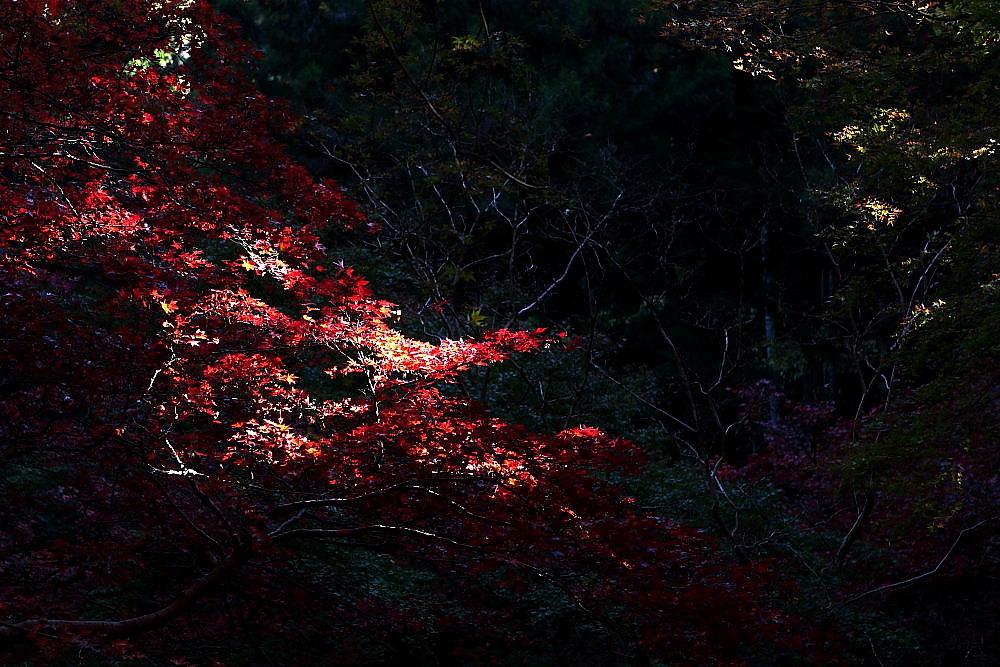 飯能市 モミジの東郷公園 その1_e0165983_12484555.jpg
