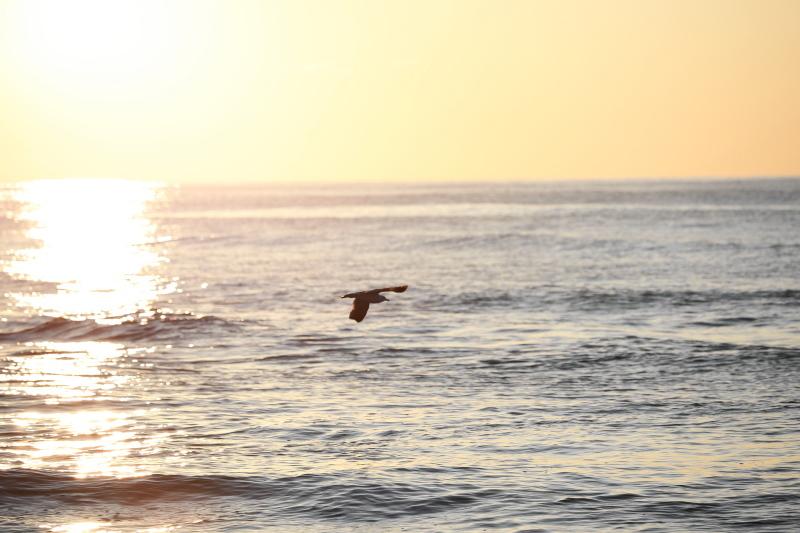 波がきた_e0169421_21243852.jpg