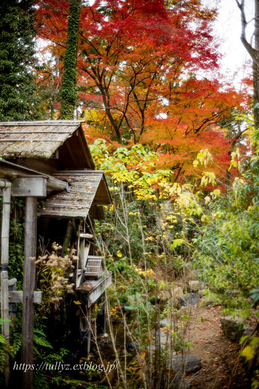 京都の秋2019(3)_d0108132_16335074.jpg