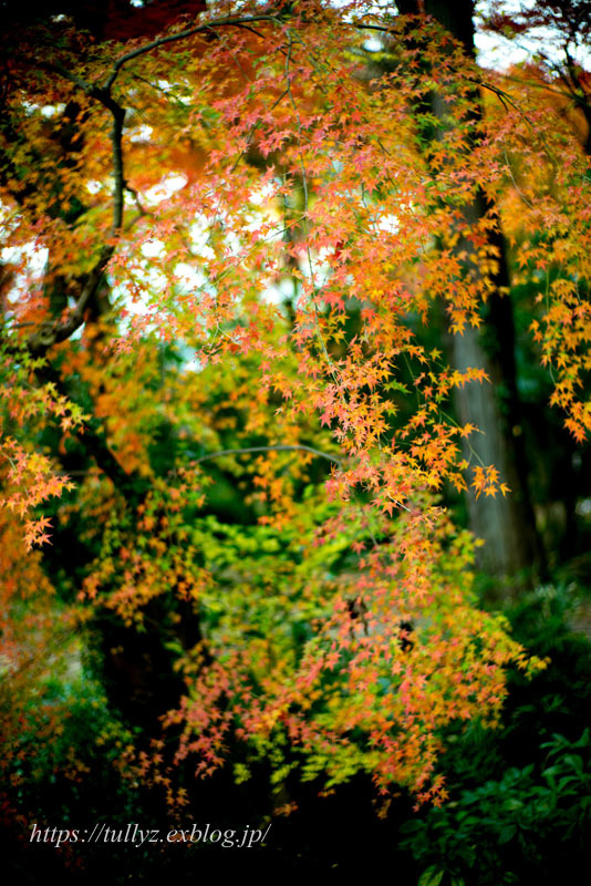 京都の秋2019(4)_d0108132_16371412.jpg