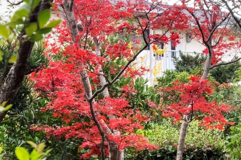 居間からの秋景色_d0246136_18410399.jpg