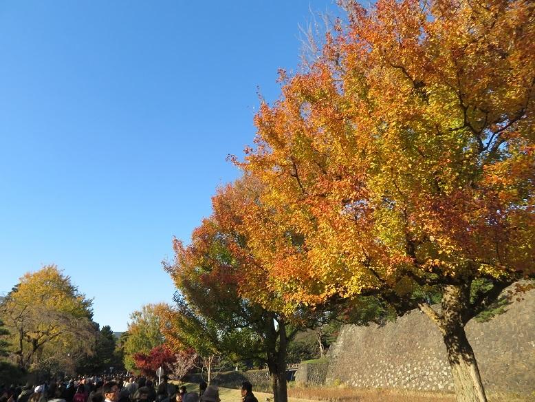 皇居乾通りで紅葉狩り、大嘗宮も見れました_b0089338_01135343.jpg