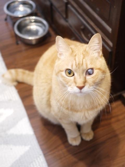 猫のお留守番 ぽぽんたくん編。_a0143140_21423056.jpg