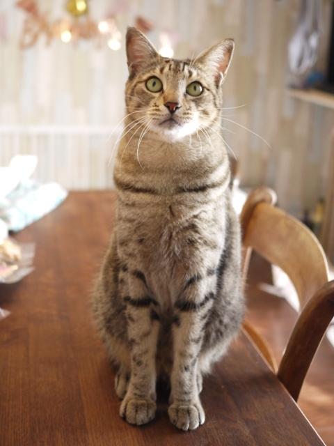 猫のお留守番 がうくん編。_a0143140_21440784.jpg