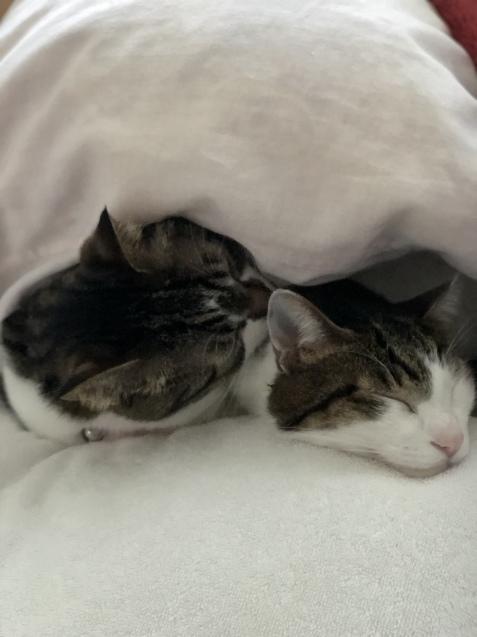 今朝の猫予報_e0379544_07415423.jpeg