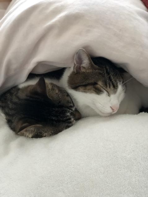 今朝の猫予報_e0379544_07445061.jpeg