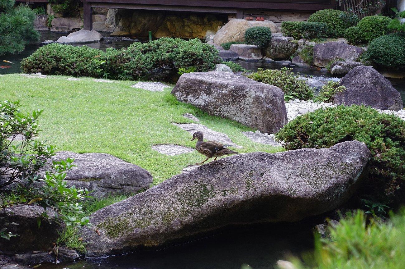 松田屋ホテル庭園(その1)_c0112559_08301930.jpg