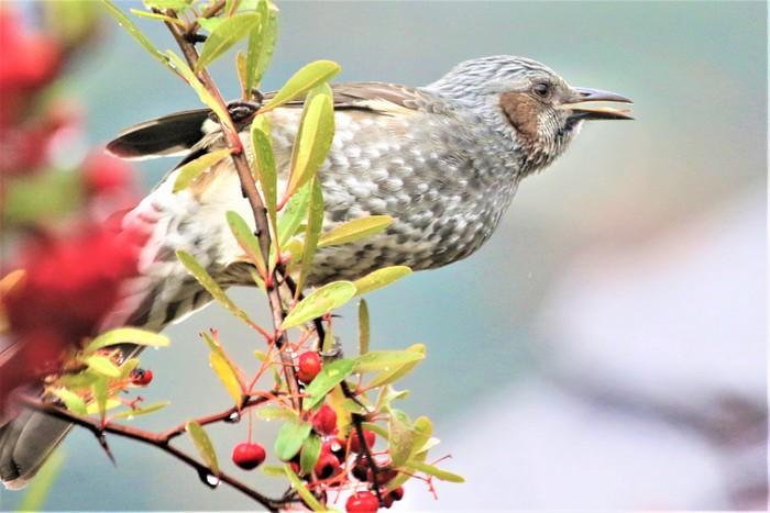 庭の野鳥達(室内より)_f0106759_5514071.jpg
