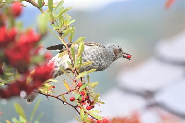庭の野鳥達(室内より)_f0106759_551544.jpg