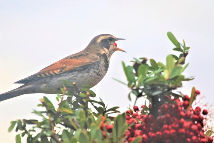 庭の野鳥達(室内より)_f0106759_5521035.jpg