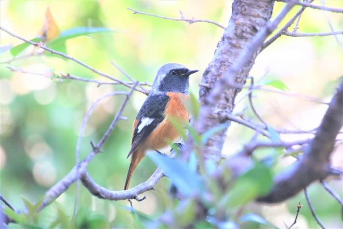 庭の野鳥達(室内より)_f0106759_555038.jpg