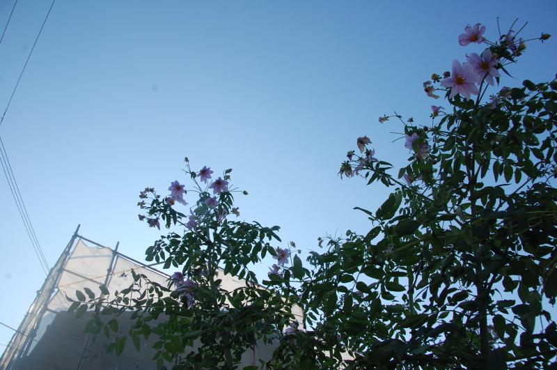 我が家の花壇 大リニューアル中_c0108460_17405188.jpg