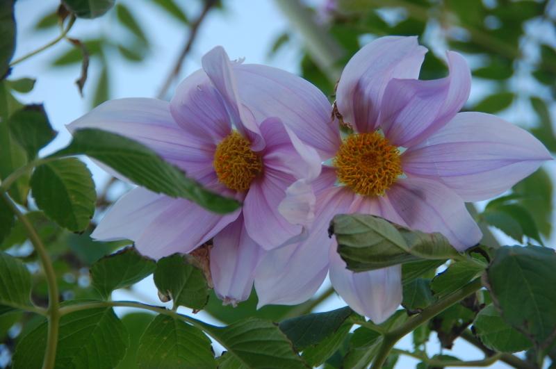 我が家の花壇 大リニューアル中_c0108460_17405265.jpg