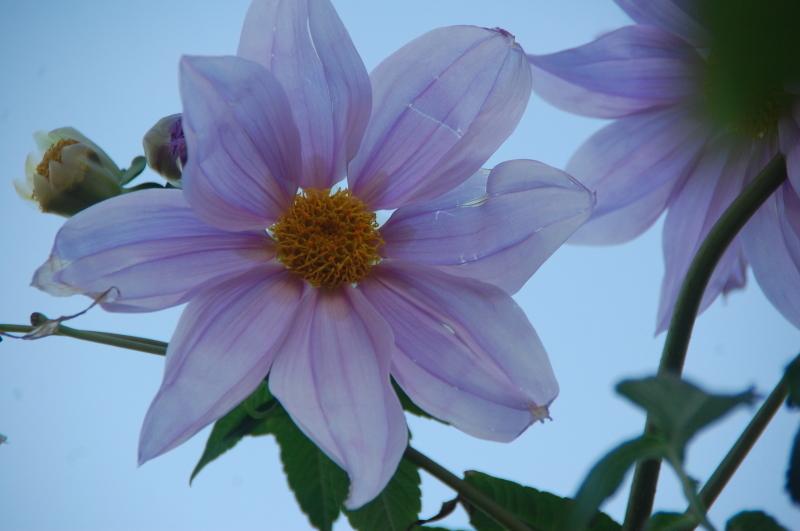 我が家の花壇 大リニューアル中_c0108460_17422087.jpg