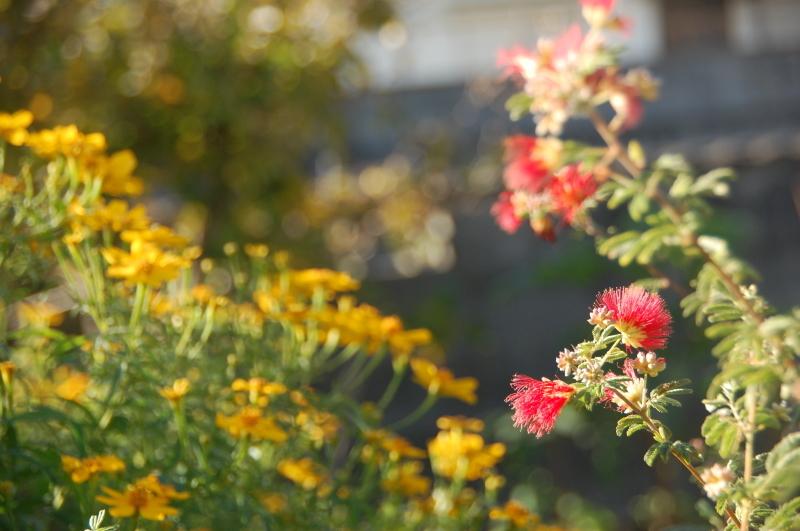 我が家の花壇 大リニューアル中_c0108460_17472248.jpg
