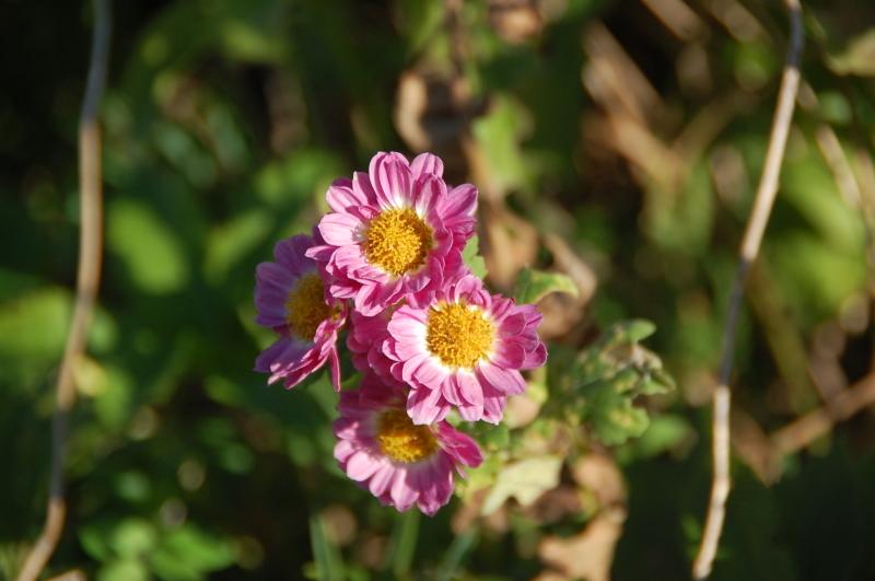 我が家の花壇 大リニューアル中_c0108460_17500545.jpg