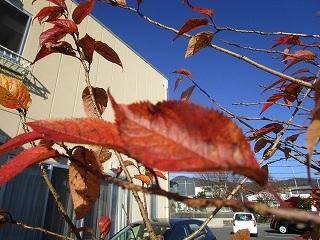 板野生活 ~冬の花~_c0218368_10200047.jpg