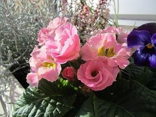 板野生活 ~冬の花~_c0218368_10201742.jpg