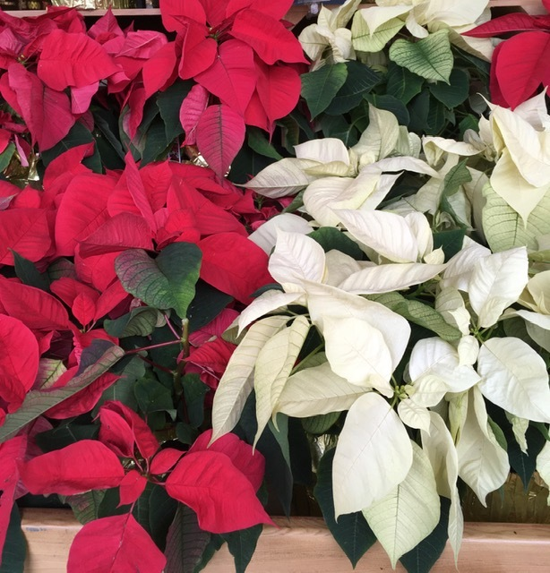 Bristol Farms のクリスマス風景_e0350971_12410072.jpg