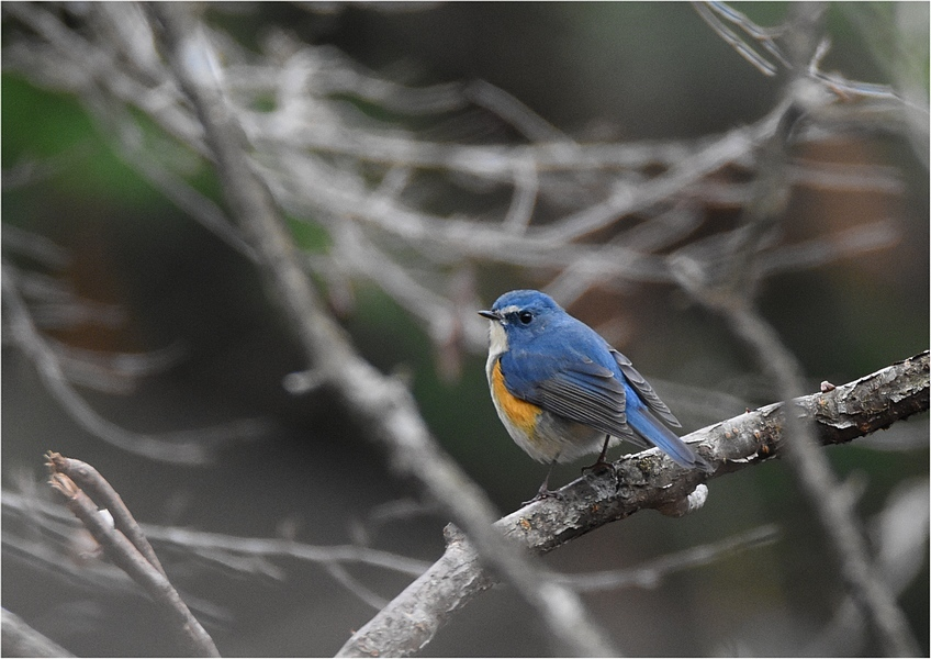 山の鳥たち_f0088971_16580686.jpg