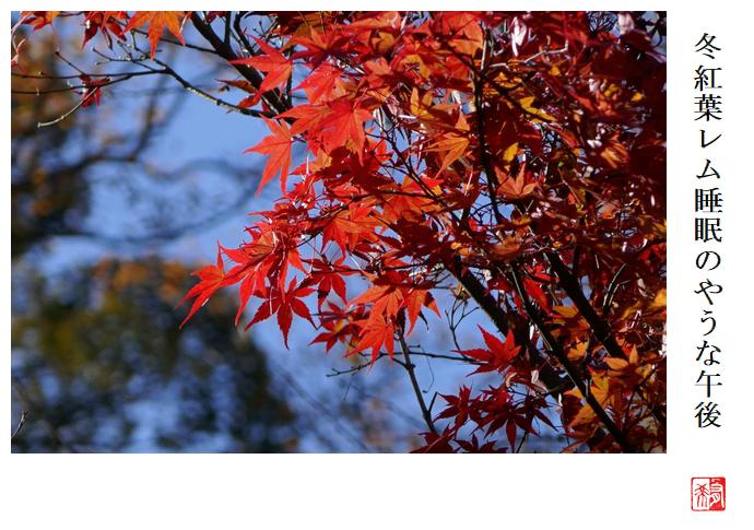 冬紅葉レム睡眠のやうな午後_a0248481_23143384.jpg