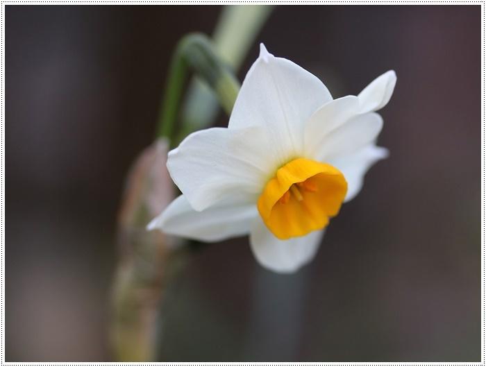 朝がぐっと冷え込んだ日は、日中は暖か~い、だから、庭でさくらと大と遊んだよ\(>∀<)/_b0175688_19413127.jpg