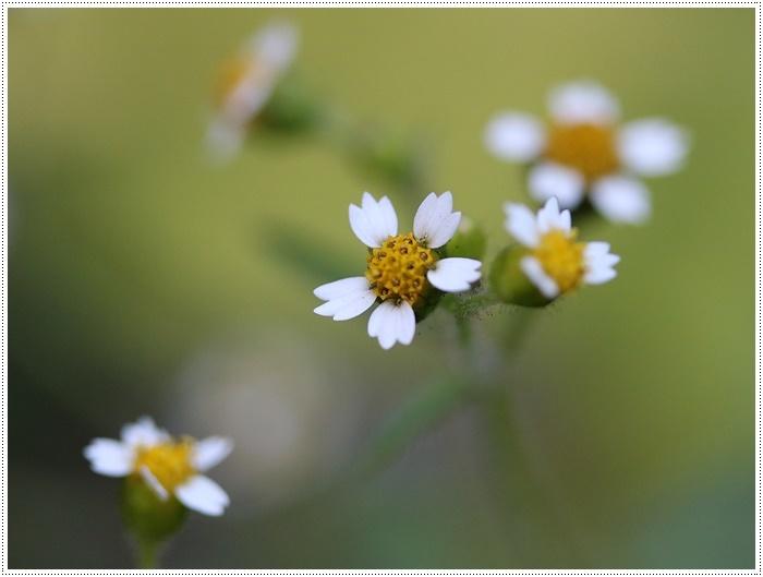 朝がぐっと冷え込んだ日は、日中は暖か~い、だから、庭でさくらと大と遊んだよ\(>∀<)/_b0175688_19413579.jpg