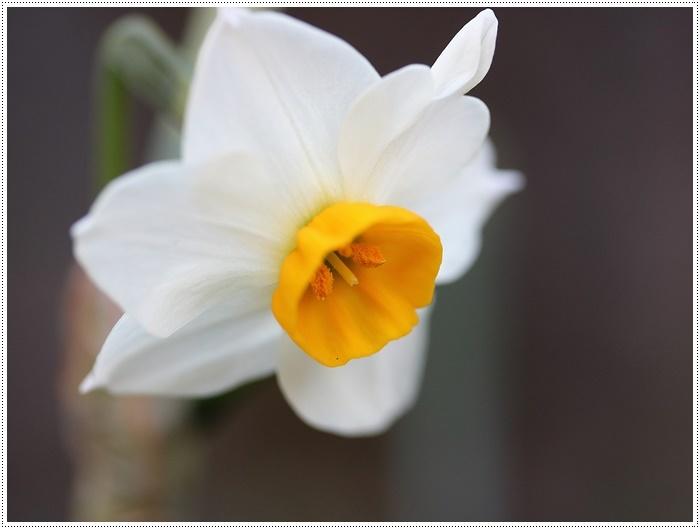 朝がぐっと冷え込んだ日は、日中は暖か~い、だから、庭でさくらと大と遊んだよ\(>∀<)/_b0175688_19415702.jpg