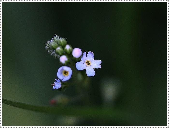 朝がぐっと冷え込んだ日は、日中は暖か~い、だから、庭でさくらと大と遊んだよ\(>∀<)/_b0175688_19420371.jpg