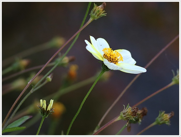 朝がぐっと冷え込んだ日は、日中は暖か~い、だから、庭でさくらと大と遊んだよ\(>∀<)/_b0175688_19441158.jpg