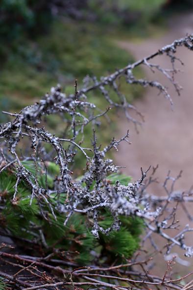 お正月のお花について_b0208604_07344197.jpg