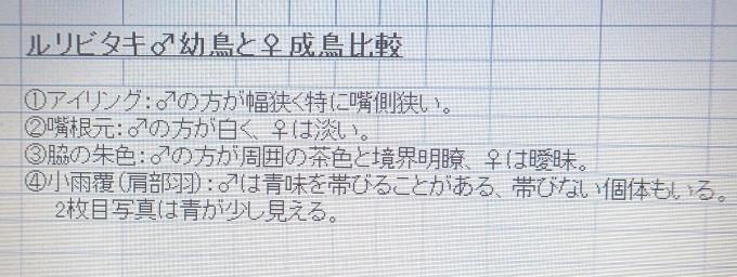 埼玉中部    ルリビタキ若雄2019/12/12①_d0251807_06555130.jpg